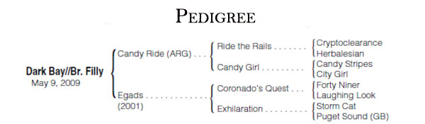 Filly Pedigree